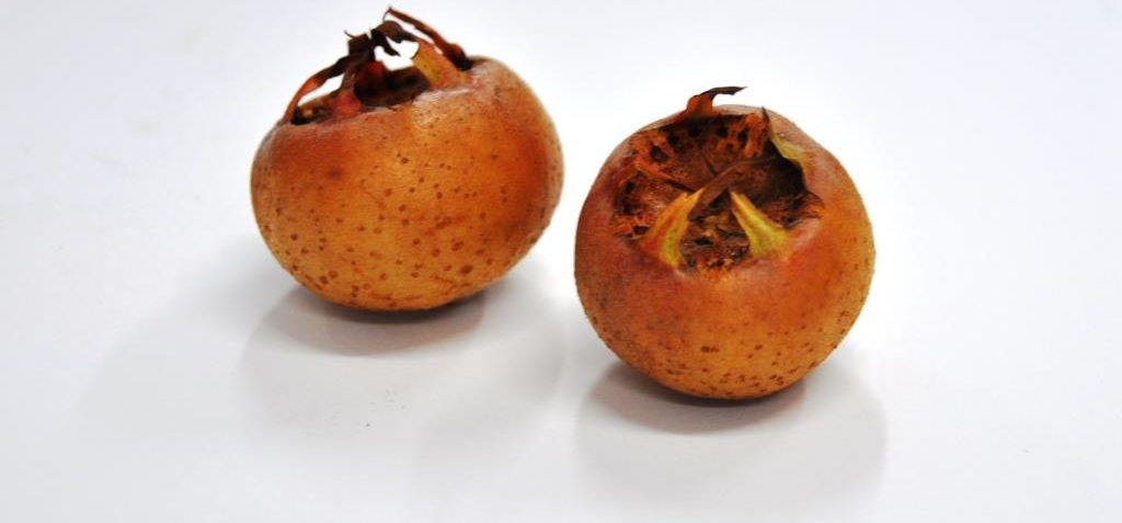 Benefit and harm to a person from medlar