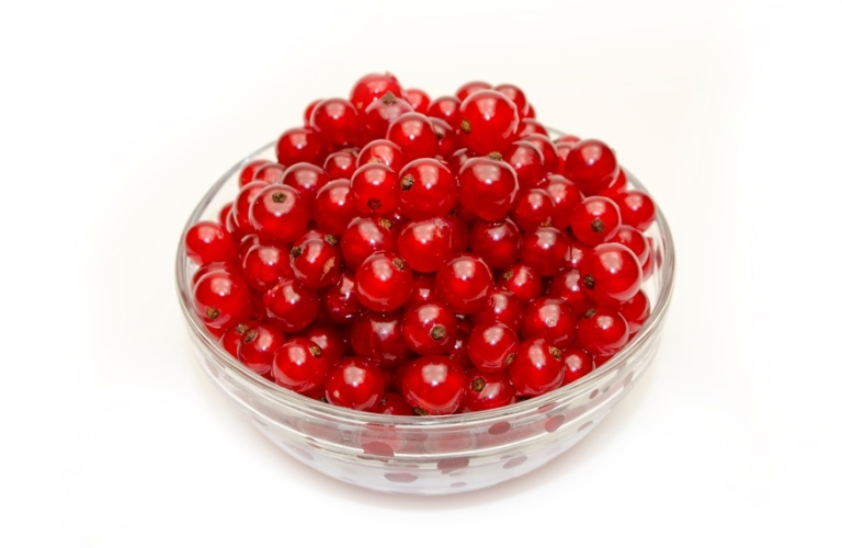 Benefits and harm to the human body from red currants