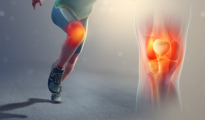 functions of the knee joint