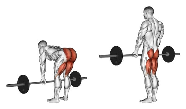 muscles worked in a deadlift